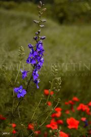 Lúka a jej kvety