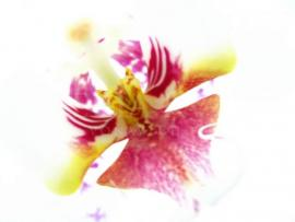 ORCHID POETRY