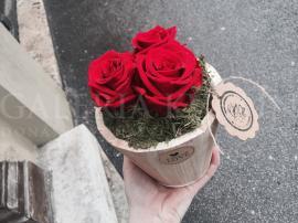 Láska TROCH ruží