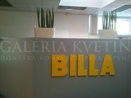 Billa - realizácia kvetinovej výzdoby a údržba