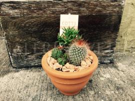 Aranžmán - kaktusy