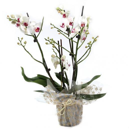 Biela viacstonková orchidea