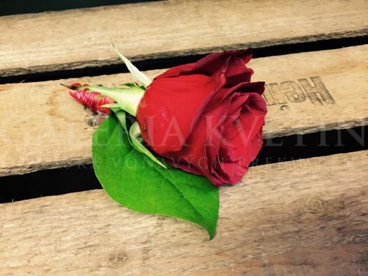 Pierko Nesmrteľná červená Galérie Kvetín